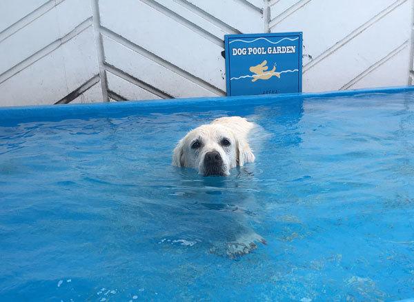 3時間泳ぎまくりまちた!_c0110361_11581496.jpg
