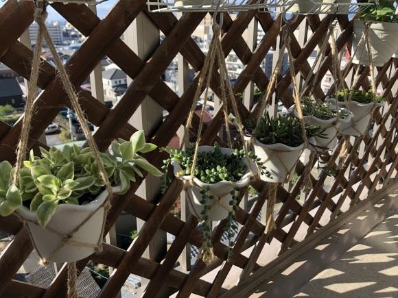 多肉植物の寄せ植えを楽しむ_f0148762_18595905.jpeg