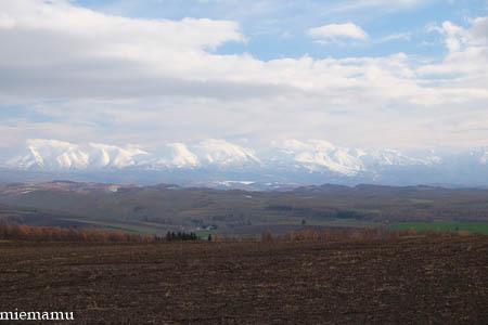 冬の装いの就実の丘~11月の就実_d0340565_19582101.jpg