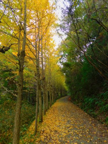 熊取の奥山雨山自然公園へハイキング&紅葉_e0136066_21310913.jpg