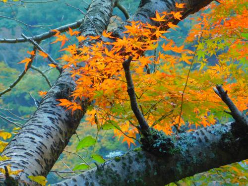 熊取の奥山雨山自然公園へハイキング&紅葉_e0136066_21311543.jpg