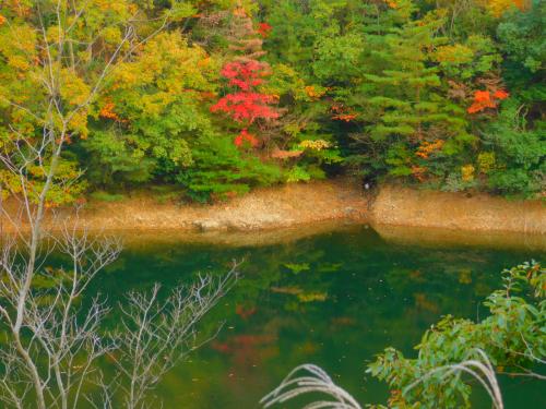 熊取の奥山雨山自然公園へハイキング&紅葉_e0136066_21311922.jpg