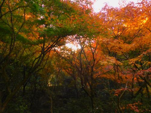 熊取の奥山雨山自然公園へハイキング&紅葉_e0136066_21380020.jpg