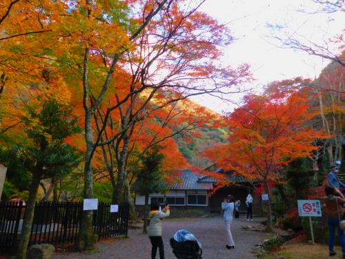 岸和田の大威徳寺、再び_e0136066_22261311.jpg