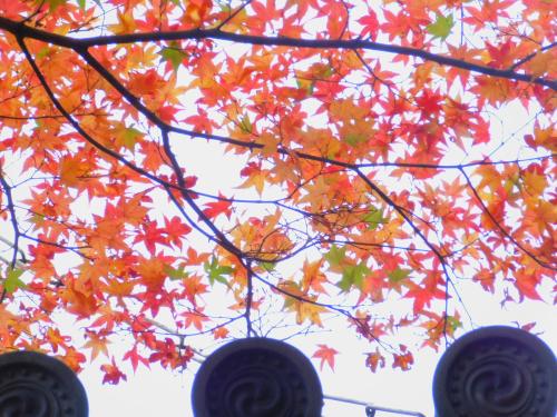 岸和田の大威徳寺、再び_e0136066_22261722.jpg