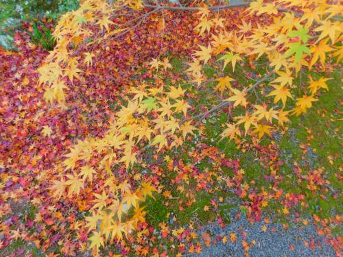 岸和田の大威徳寺、再び_e0136066_22262505.jpg