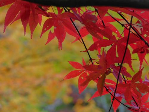 岸和田の大威徳寺、再び_e0136066_22273470.jpg