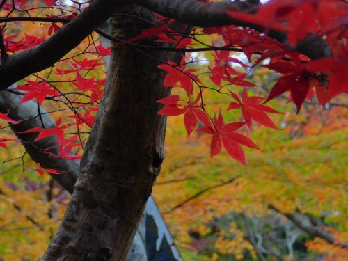 岸和田の大威徳寺、再び_e0136066_22273735.jpg