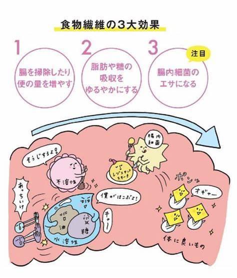 腸内細菌/免疫/食物繊維_a0117168_09013049.jpeg