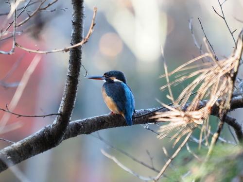 今日は鳥撮り_f0348480_16350748.jpg