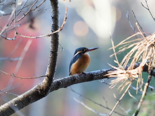 今日は鳥撮り_f0348480_16354830.jpg