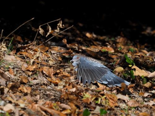 今日は鳥撮り_f0348480_16365732.jpg