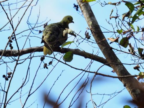 今日は鳥撮り_f0348480_16404638.jpg
