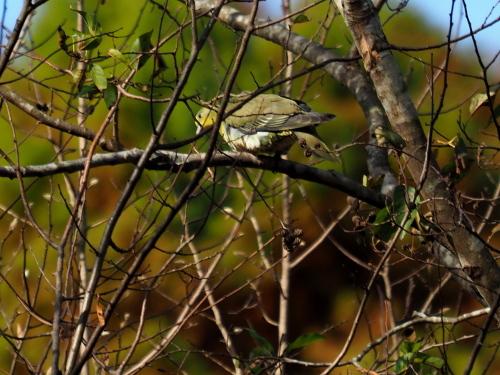 今日は鳥撮り_f0348480_16412254.jpg