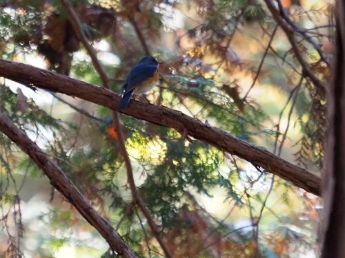 今日は鳥撮り_f0348480_16420465.jpg