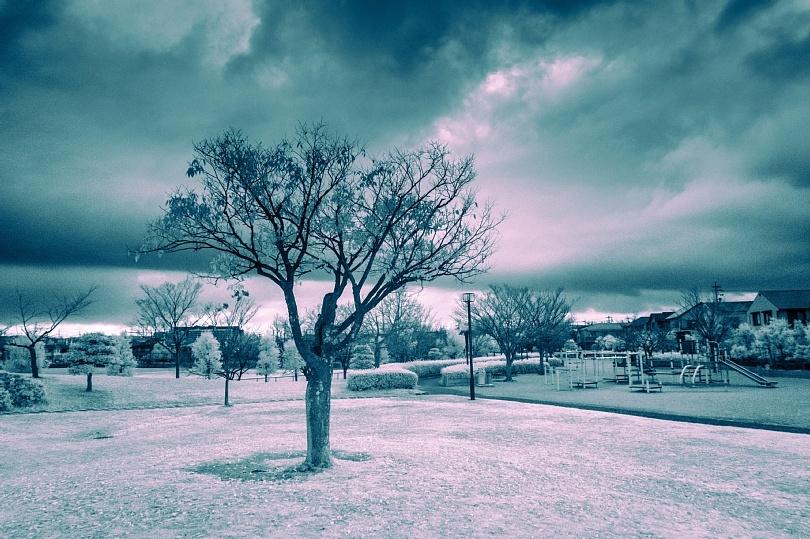 A Zelkova Tree In November_b0403692_09202540.jpg