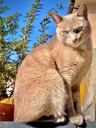Happy Caturday。。#28_d0358793_22505122.jpg
