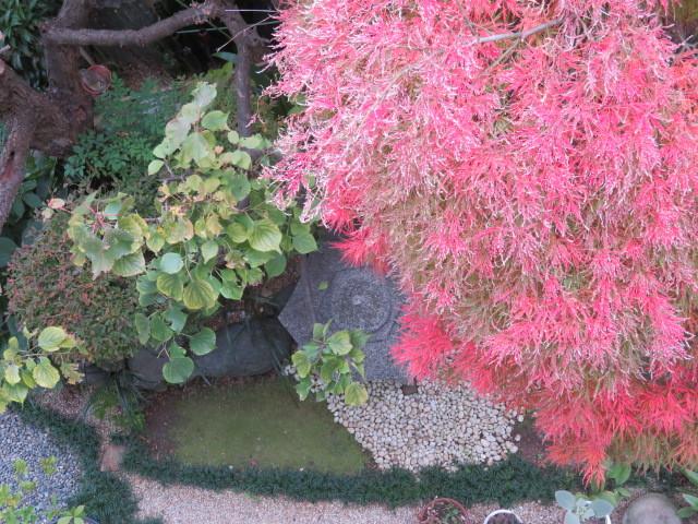 窓辺の紅葉を楽しむ_f0329849_16475018.jpg