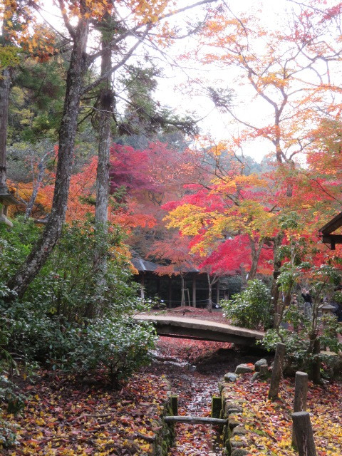窓辺の紅葉を楽しむ_f0329849_16485759.jpg