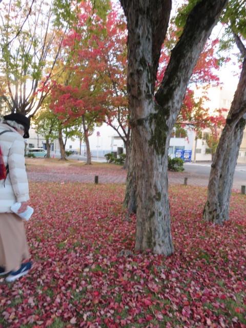 窓辺の紅葉を楽しむ_f0329849_16504873.jpg