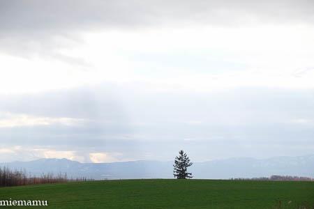優しい光の就実の丘~11月の就実_d0340565_20092254.jpg