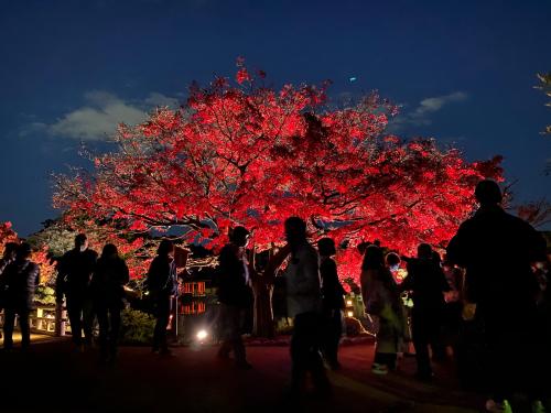 大仙公園の日本庭園のライトアップ_e0136066_17355179.jpg