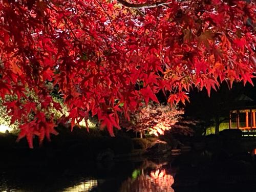 大仙公園の日本庭園のライトアップ_e0136066_17370306.jpg