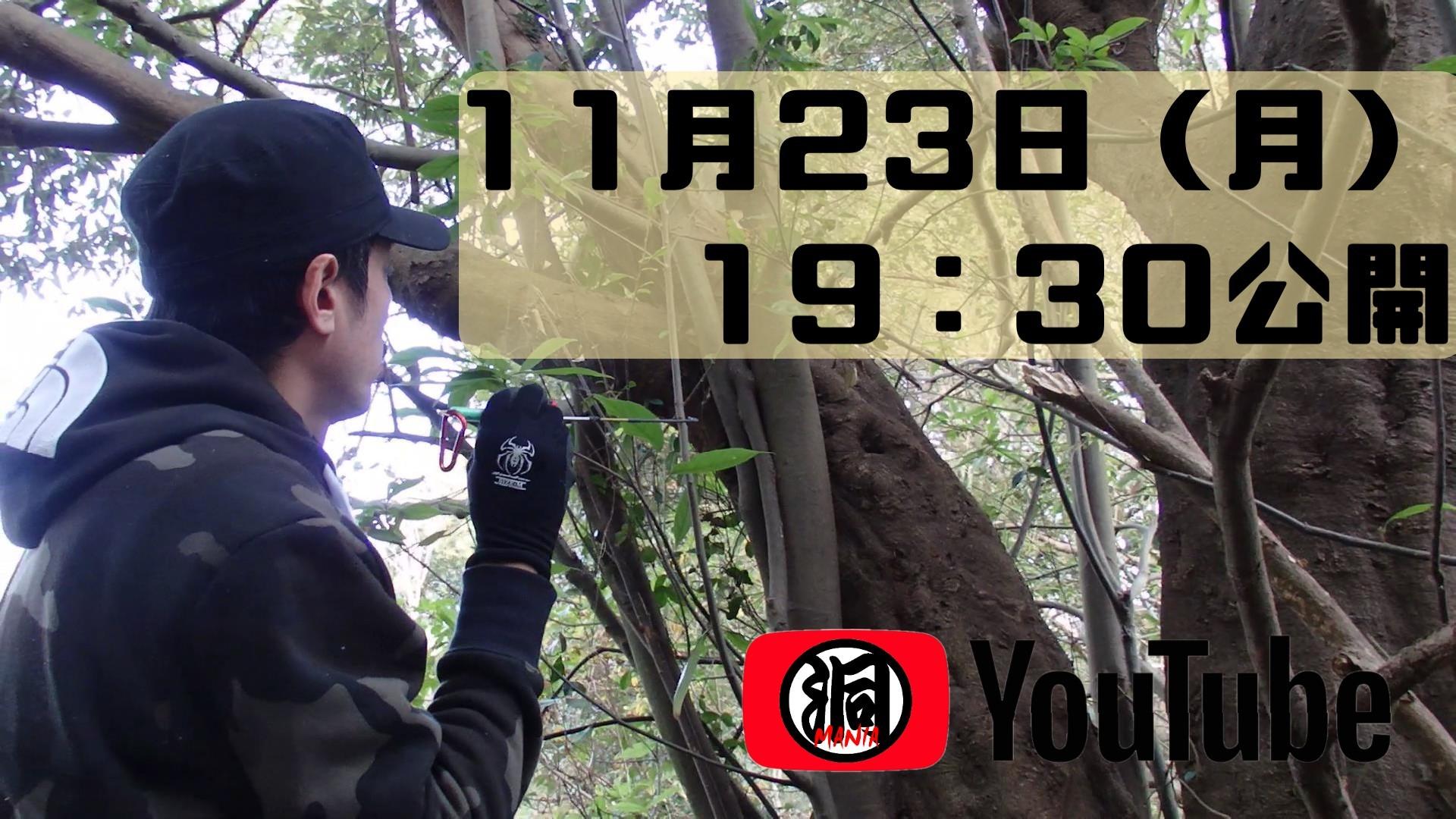 明日19:30より、もっと公園で11月のクワガタに挑戦してみた続編YOUTUBE公開!_f0183484_22435339.jpg
