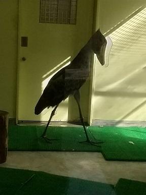 のいち動物公園でハシビロコウに会ってきた♪_d0043390_22374771.jpg