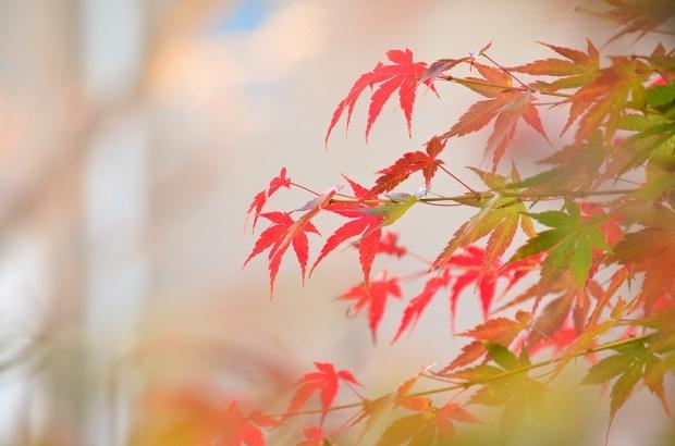 晩秋の庭 2020_d0025294_17232033.jpg