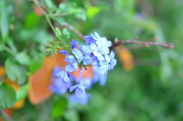 晩秋の庭 2020_d0025294_17343375.jpg
