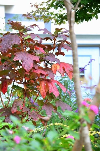 晩秋の庭 2020_d0025294_17383762.jpg
