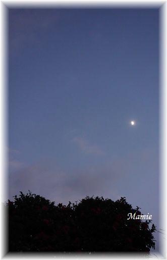 ♡の山茶花の上にお月様_d0387712_19164583.jpg