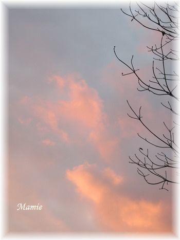 ♡の山茶花の上にお月様_d0387712_19170375.jpg