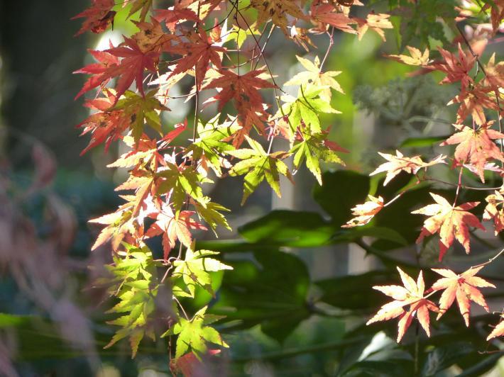 あけぼの山農業公園 庭園_f0296312_18150124.jpg
