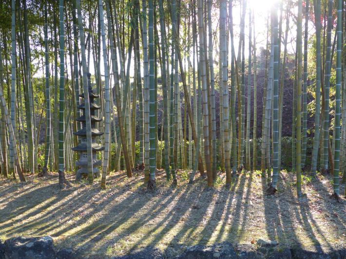 あけぼの山農業公園 庭園_f0296312_18170948.jpg