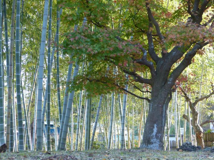 あけぼの山農業公園 庭園_f0296312_18212448.jpg