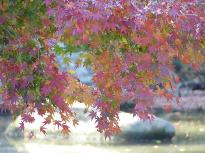 あけぼの山農業公園 庭園_f0296312_18221180.jpg