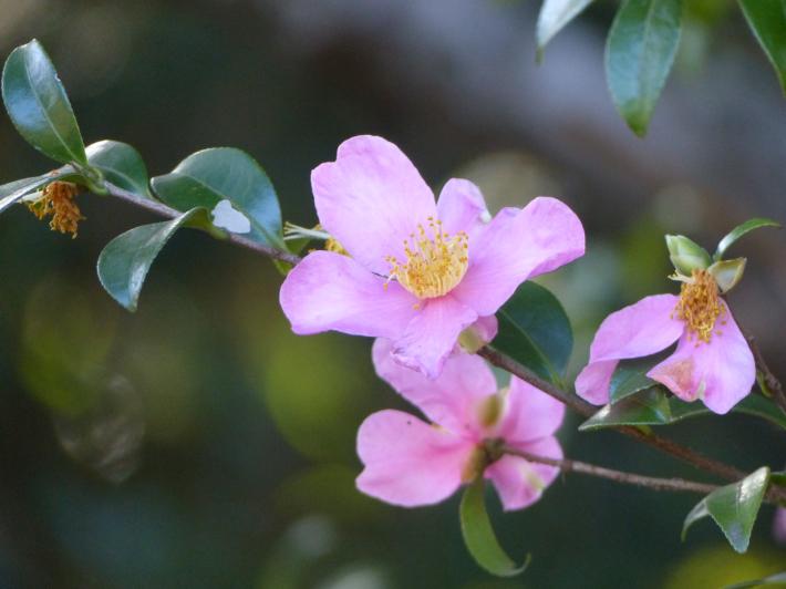 あけぼの山農業公園 庭園_f0296312_18251400.jpg