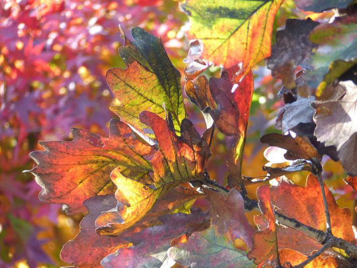 あけぼの山農業公園 庭園_f0296312_19284515.jpg