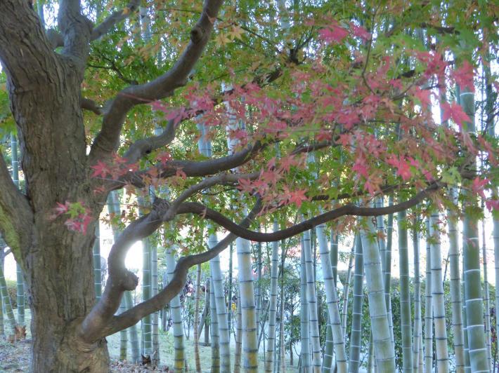 あけぼの山農業公園 庭園_f0296312_19302349.jpg