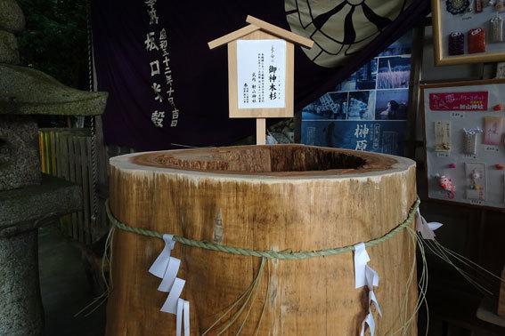 御神木杉が拝殿に_b0145257_12501087.jpg