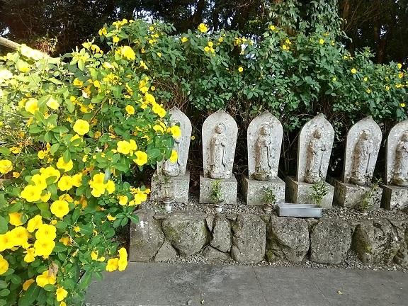 24番札所・最御崎寺でヤッコソウに遭遇した_d0043390_23332476.jpg