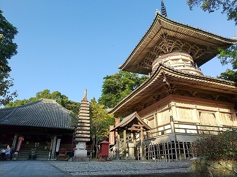 24番札所・最御崎寺でヤッコソウに遭遇した_d0043390_23340765.jpg