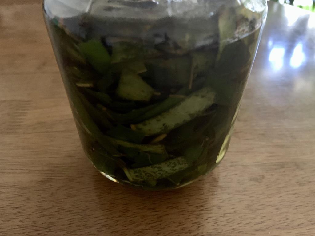 枇杷の葉茶と枇杷の葉酒_b0349795_10494780.jpeg