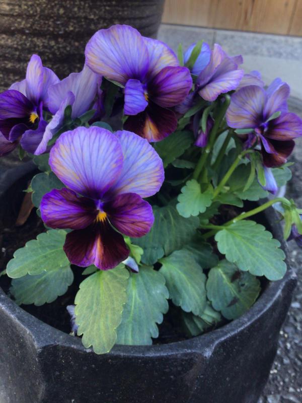 色とりどりの花に囲まれたい訳ではないのだけど・・・_c0404712_10493893.jpg