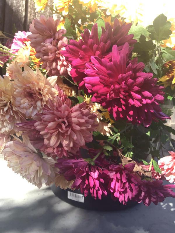 色とりどりの花に囲まれたい訳ではないのだけど・・・_c0404712_10501692.jpg