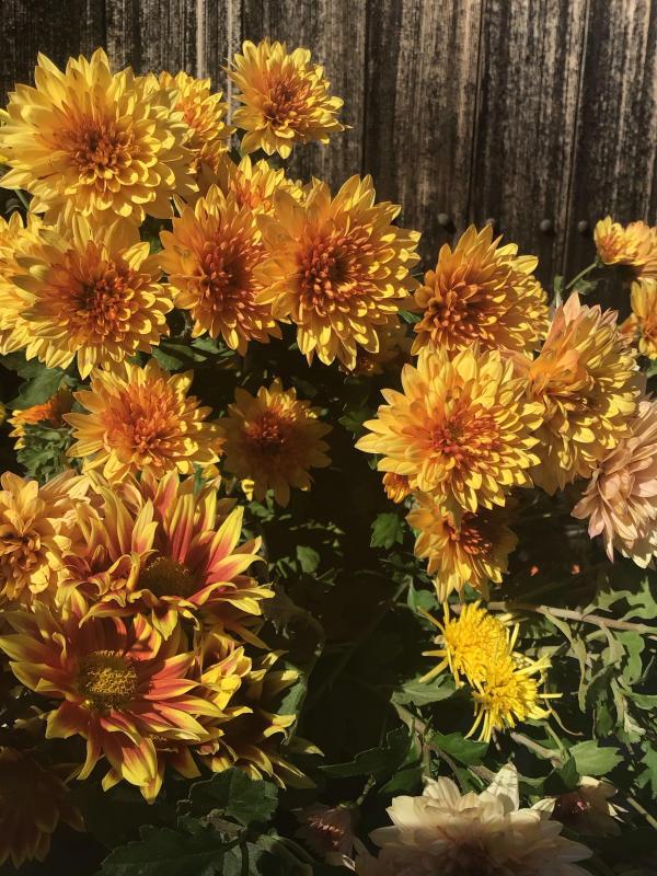 色とりどりの花に囲まれたい訳ではないのだけど・・・_c0404712_10501880.jpg