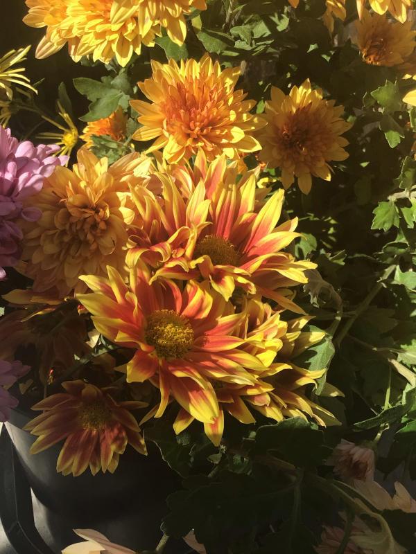 色とりどりの花に囲まれたい訳ではないのだけど・・・_c0404712_10501964.jpg