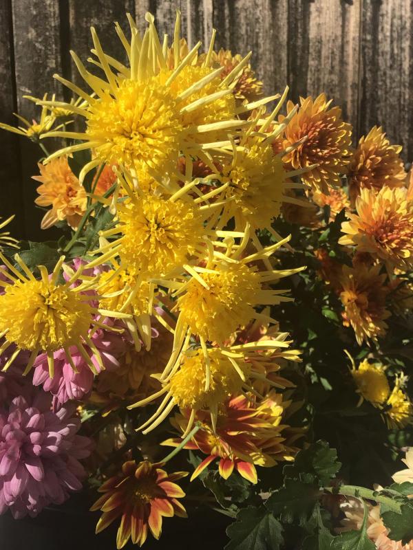 色とりどりの花に囲まれたい訳ではないのだけど・・・_c0404712_10503149.jpg